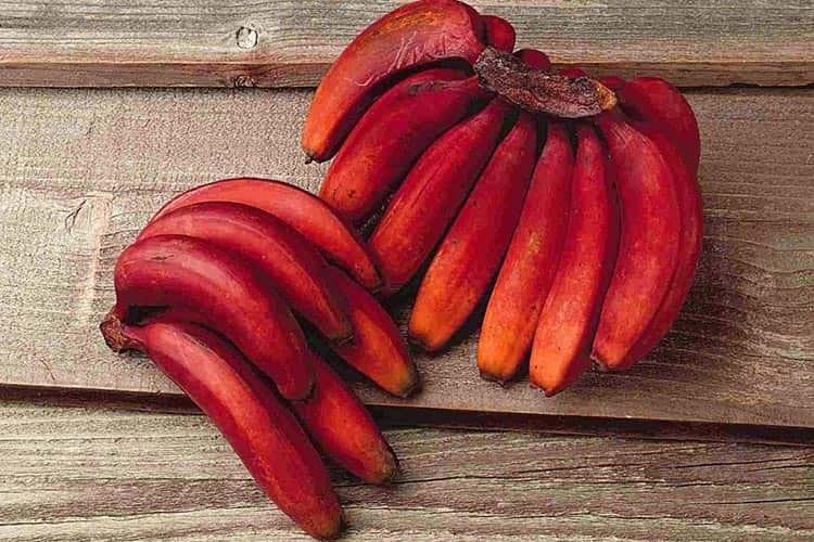 Hiç Duymadığınız Dünya'nın En İlginç Egzotik Meyveleri
