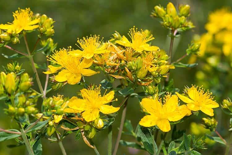 Depresyona İyi Gelen En Popüler 11 Bitki ve Takviye