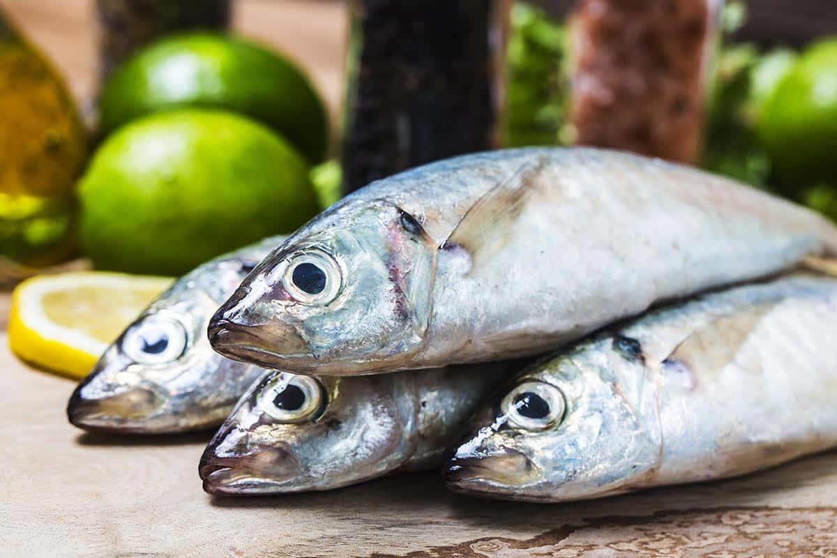 Balık Kolajeni Nedir